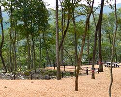 公園ガイド